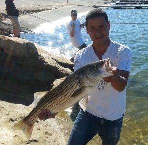 Castaic lake fishing in california for Castaic lake fishing