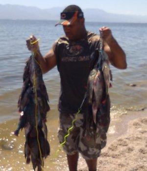 Salton sea fishing in california for Salton sea fishing