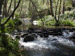 Santa ana river fishing in california for Santa ana river lakes fishing tips